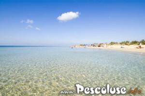 Spiaggia di Pescoluse comune di Salve
